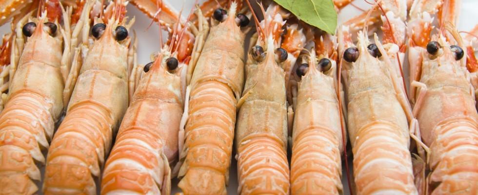 Mazzancolle e scampi quali sono le differenze agrodolce for Cucinare scampi