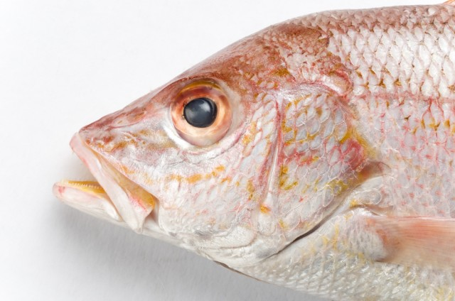 testa di pesce