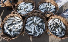 I 10 benefici del pesce fresco