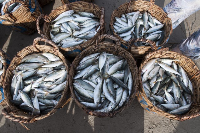 pesce fresco in vendita