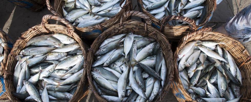 10 motivi per mangiare il pesce fresco