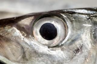 Tenete d'occhio il Calendario del Pesce: Stefano Chinappi ci spiega come fare