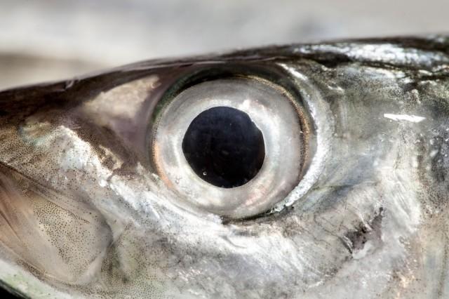 occhio di pesce
