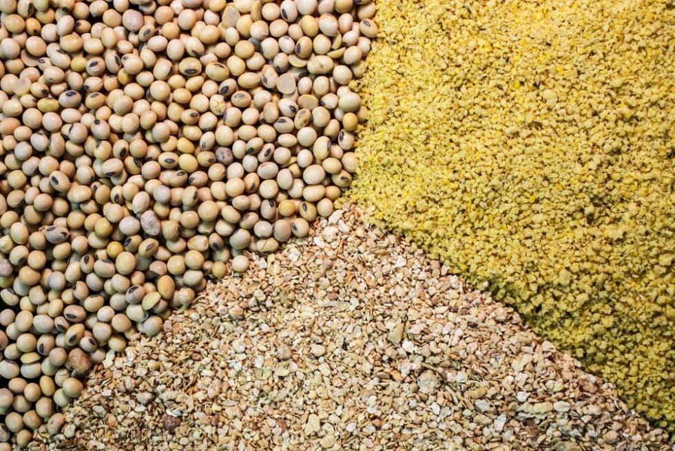 Quali proteine assumono vegani e vegetariani? - Foto 8