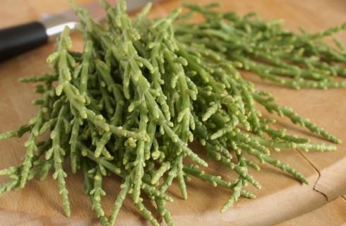 Cos'è la salicornia?