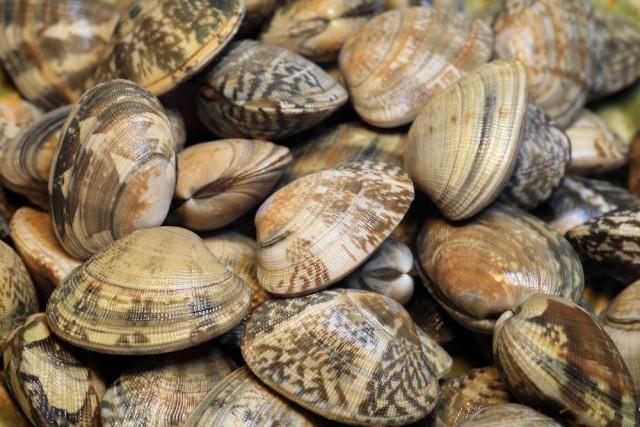 molluschi e frutti di mare