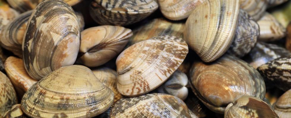 15 molluschi in conchiglia da conoscere e assaggiare