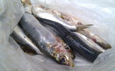 Come sfilettare il pesce alla perfezione e senza errori