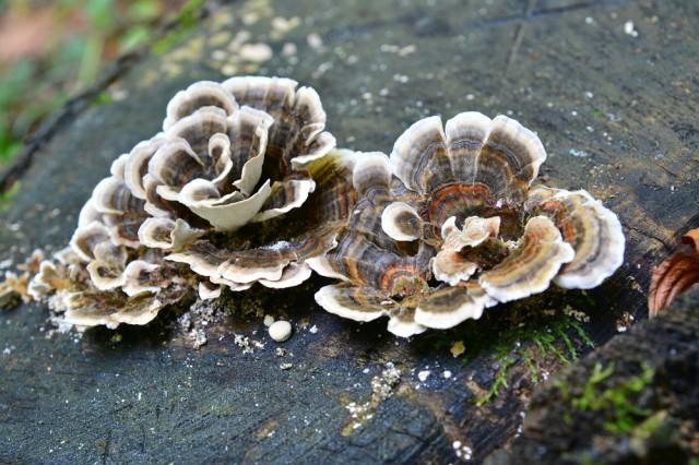 Klotrimazol da un fungo su unguento di unghie
