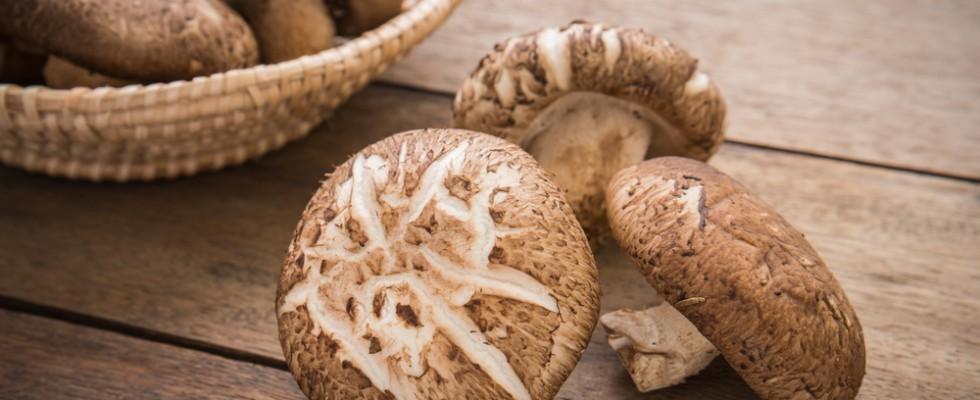 10 funghi dal mondo che dovreste conoscere