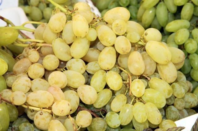 L 39 uva da tavola dalla a alla z agrodolce - Uva da tavola coltivazione ...