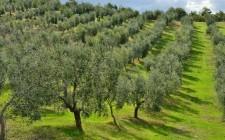 La mappa dell'olio extravergine italiano