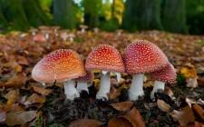 Attenzione! 17 funghi velenosi da evitare