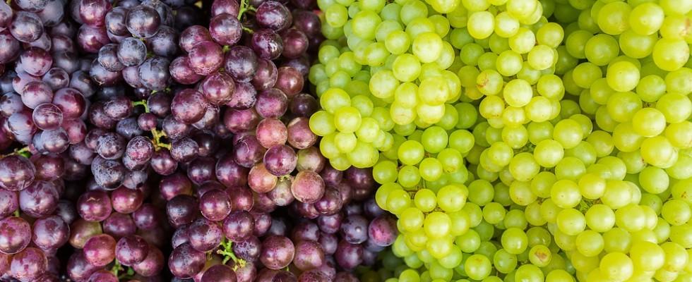 L'uva da tavola dalla A alla Z