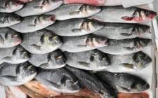 Fish Track: l'impronta contro le frodi sul pesce