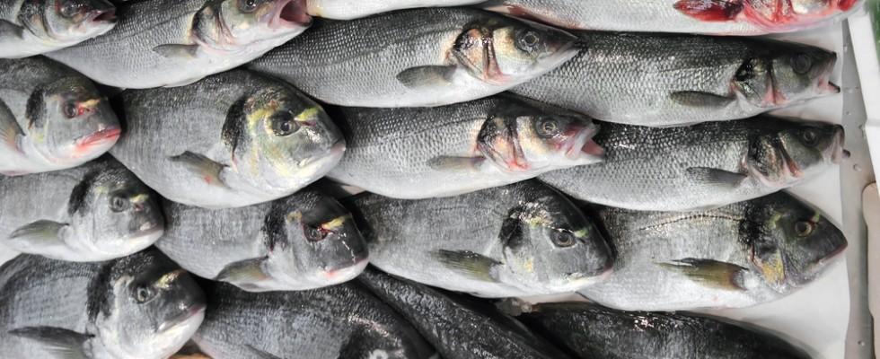 Arriva Fish Track: l'impronta digitale dei pesci contro le frodi