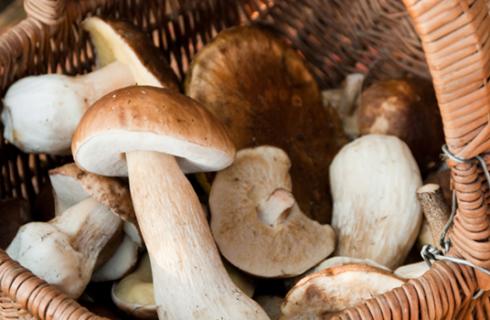 Pasta con funghi e asiago: la ricetta sfiziosa