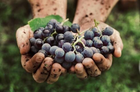 L'Italia batte la Francia come primo prduttore di vino al mondo