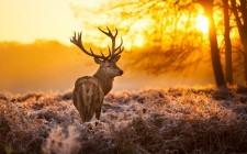 Guida alla caccia: selvaggina da pelo