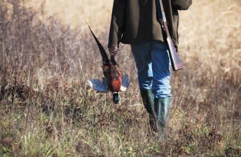 Guida alla caccia: selvaggina da piuma