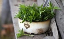 5 modi per usare l'ortica in cucina