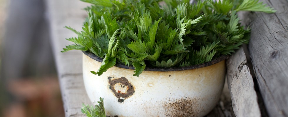 Pungente e aromatica: 5 idee per usare l'ortica in cucina