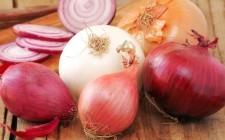L'Italia delle cipolle in 20 varietà