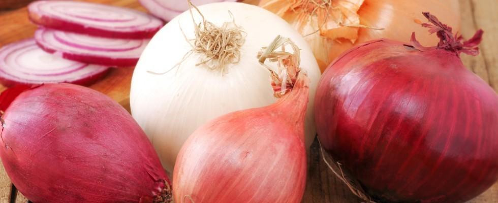 L'Italia delle cipolle in 20 varietà diverse