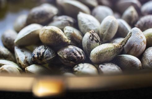 Semi di canapa: perché e come mangiarli