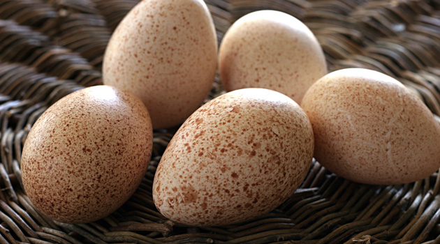 Turkey-Eggs