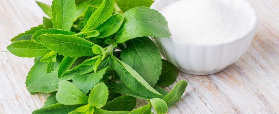Cos 39 la stevia e 5 idee per usarla in cucina agrodolce for Stevia pianta