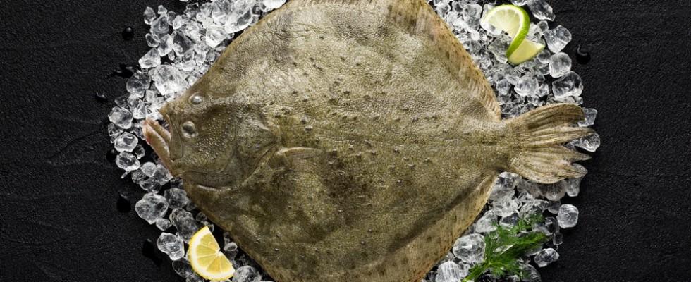 Cucinare il rombo: 10 ricette da provare
