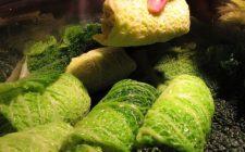 Come preparare la verza ripiena vegetariana