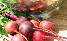 Gli antipasti con le barbabietole rosse in 5 ricette facili