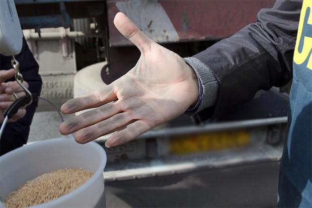 grano-sporco-e-tossico-nel-porto-di-bari