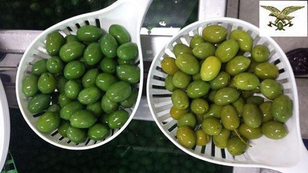 olive verniciate