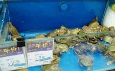 I cibi più strani in vendita in Cina