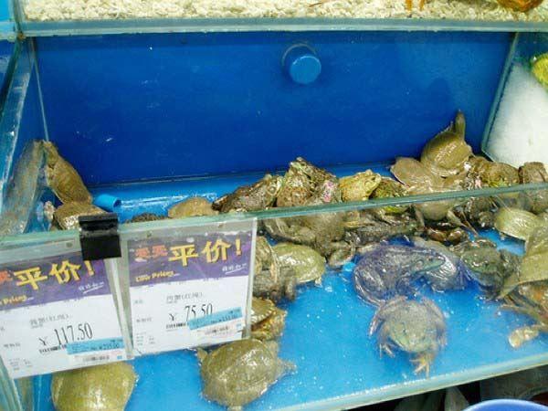 I cibi più strani in vendita in Cina - Foto 7