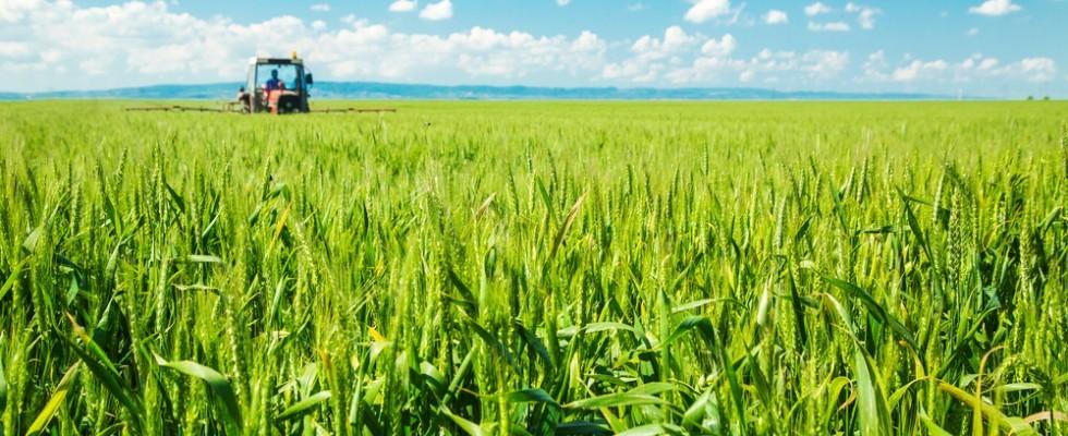 Inverno caldo: come può influire sulle colture