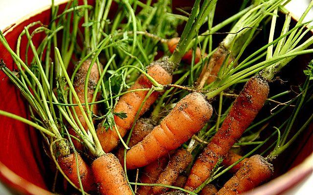 5 ricette con le carote facili e gustose