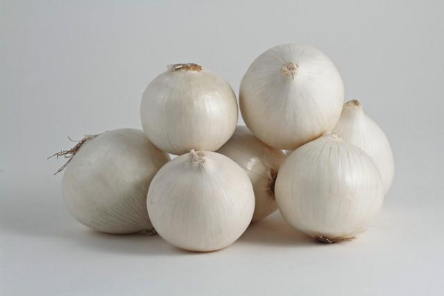 cipolla bianca di medicina