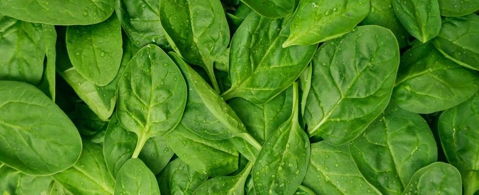 Cucinare con gli spinaci freschi in 10 ricette