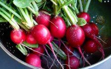 Il pesto con foglie di ravanelli: ecco la ricetta vegan