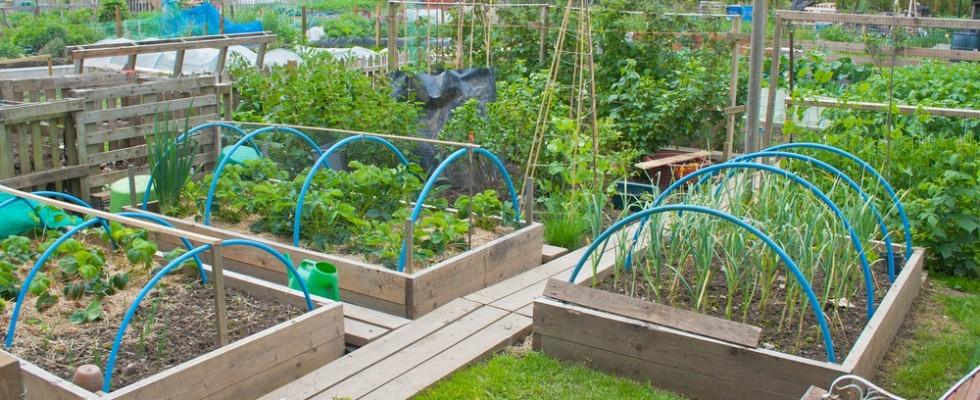 Bjull: come vendere gli alimenti del proprio orto