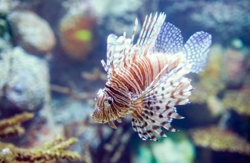 Il pesce del futuro? Quello scorpione