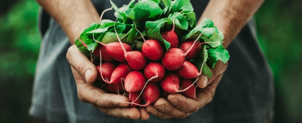 5 modi di usare i ravanelli in cucina