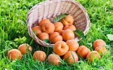La confettura di albicocche da fare in casa con la ricetta semplice