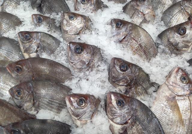 fish-727223_1280