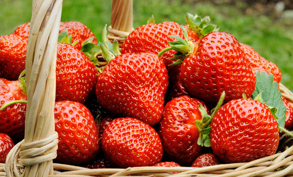 fragola carezza