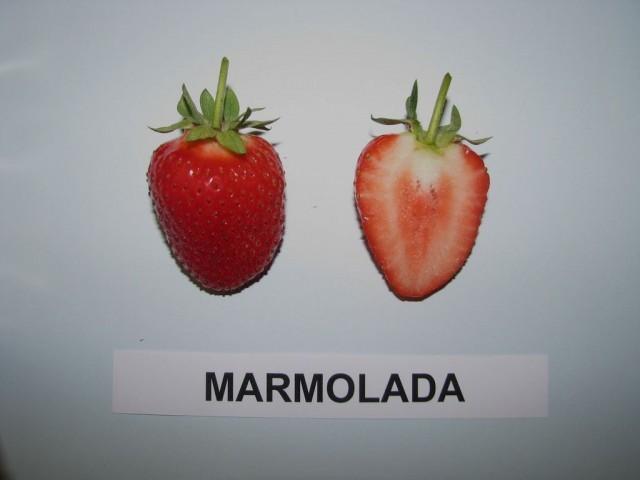 marmolada fragola